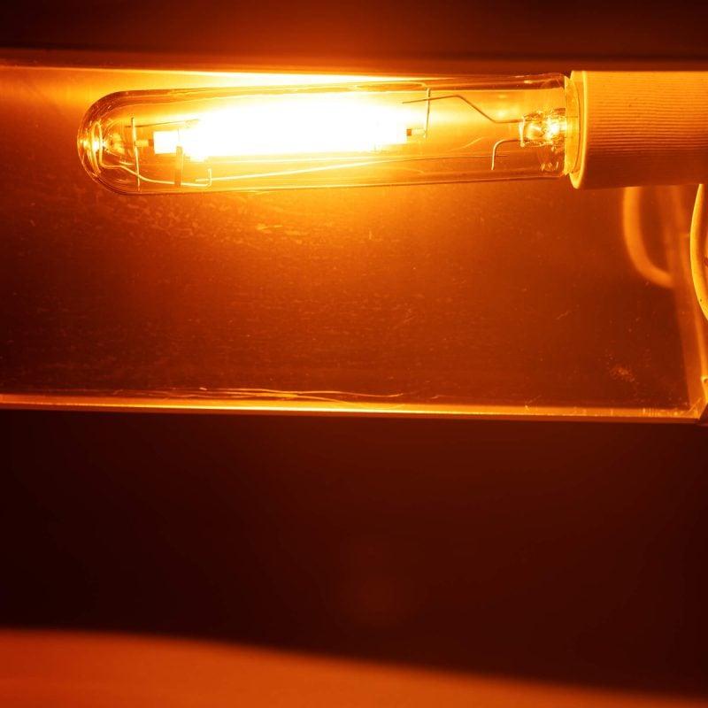 תאורה בגידול InDoor
